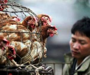 After H7N9 Virus Found, Hong Kong to Cull 15,000 Chickens