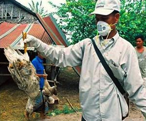 Bird Flu H5N8 Virus Pose No Threat to Humans