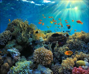 Impact of Climate Change in Marine Life