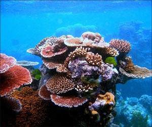 Coral Reefs Fall Victim to Ocean Warming
