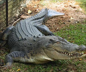 British Man Shares Suburban Home With Crocodile For Last 6 Years