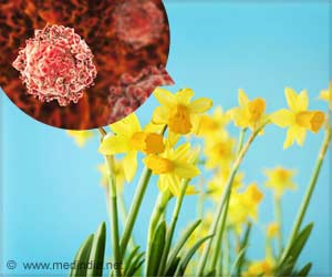 Natural Cancer-Fighting Compound in Daffodils