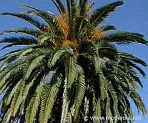 Date Palm Leaves can Purify Waste Water