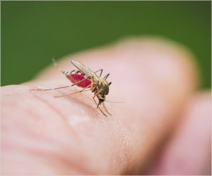 Florida: 3 New Dengue Cases Confirmed