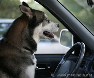 Dogs Learn to Drive