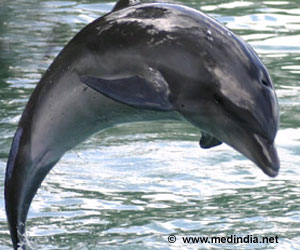 Dolphin Undergoes Therapeutic Bronchoscopy