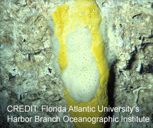 New Compound In Marine Sponge Fights Drug-resistant Bacteria