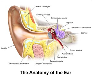 Pitch-Detection Secrets of the Inner Ear Unlocked