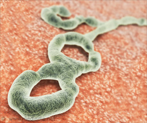 Ebola Virus: Promising New Therapeutic Approach Discovered