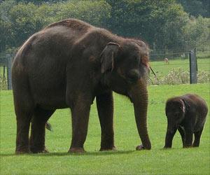 Zero Tolerance for Illegal Wildlife Trade in India: Odisha CM
