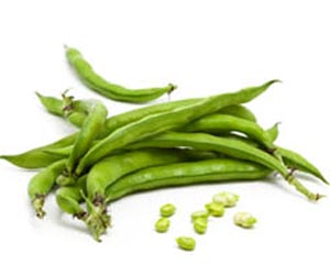 Faba Beans can Help Beat Cancer