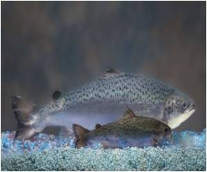 The Study of Evolution of Fish and Their Relationships