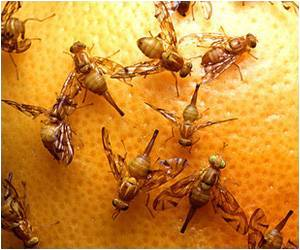 Species-recognition System in Fruit Flies Discovered