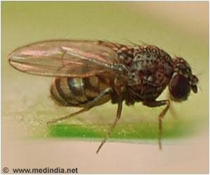 Movement of Fruit Fly Influences Its Circadian Clock