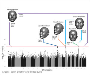 Genes Determine the Shape of Your Face