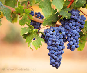 Natural Compound in Grape Skin, Seeds Can Help Fight Lung Cancer