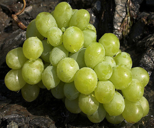 Grape Consumption may Play a Role in Eye Health