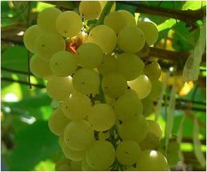 Grape Seed Extract Potent Against Head and Neck Cancer