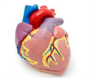 Experts Identify Two Key Proteins That Control Heart Growth