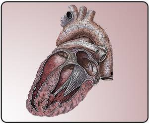 Good Efficacy Observed With Catheter-Placed Heart Valve