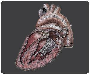 Artificial Heart Tissue That can Mimic Functions of a Real Heart Tissue Developed