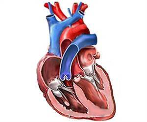 Method Used By Heart Cells To Regulate Heart Activity Discovered By Research