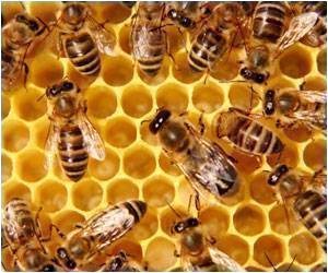 Gene Activity of Bees Tracked When Eating and Not Eating Honey