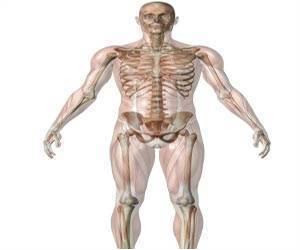 Effects of Muscle on Inner and Outer Layer of Bones Different in Men and Women