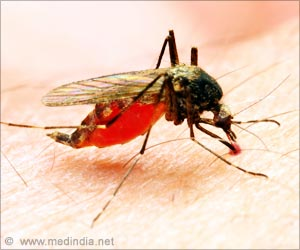 Chromosome Anomaly may Cause Malaria-transmitting Mosquito