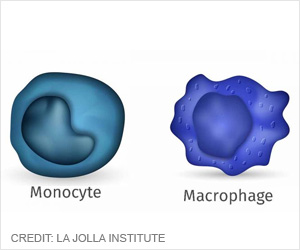 Related Immune Cells Can Now Be Distinguished By Molecular Manipulation