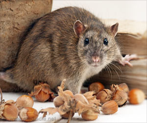 Ratatouille At AIIMS? Live Rat Found in Bread Packet, Officials Ban Company!