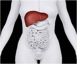 Liver Plays Crucial Role in Regulating Weight