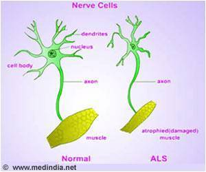 Lou Gehrig's Disease Study: Renewing Brain's Aging Support Cells may Help Neurons Survive