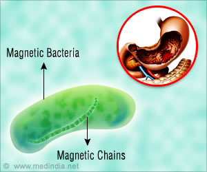 Magnetic Bacteria That can Help Diagnose Stomach Cancer Created by Scientists