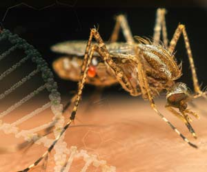 First Complete Genomic Sequencing of Mosquito that Spreads Malaria