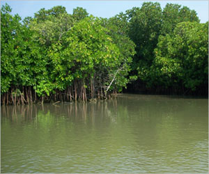 Mangrove Forests Protect Coastal Regions From Sea-Level Rise Caused By Climatic Change