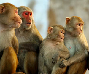'Monkey Menace' Has Reached Epic Proportions Everywhere in India