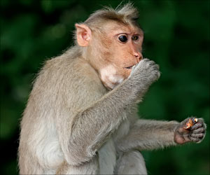 Humans can Give Monkeys Staphylococcus Aureus Bacteria