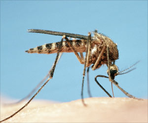 Infected Mosquitoes Love Human Odor
