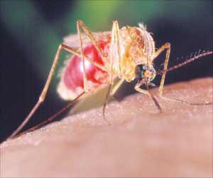 Avoid Becoming Susceptible to Mosquito Borne Illnesses or Swine Flu