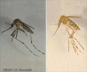 Genetically Modified Mosquitoes Can Help Prevent Spread of Diseases