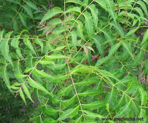 Indian Neem Tree Offers Hope For Cancer Patients