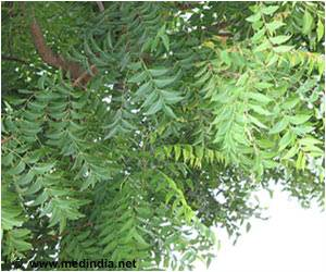 Soon, Neem Tree to Fight Against HIV Virus