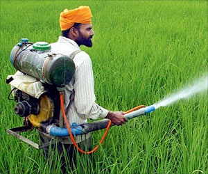 Lahore Residents Exposed to Harmful Pesticides
