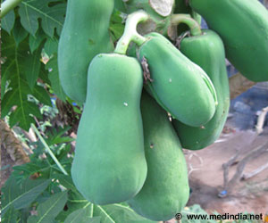 Papaya Leaves in Demand Thanks to the Increasing Dengue Cases