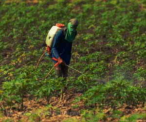 Paraquat Herbicide Linked to the Parkinson's Disease