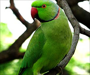 Man Kills Wife and Parrot for Talking too Much
