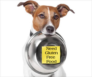 Gluten-Free Food for Your Pets Keep Them in a Better Condition