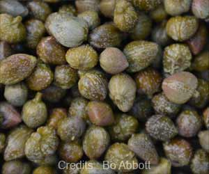 Pickled Capers can Activate Proteins Important for Human Brain and Heart Health