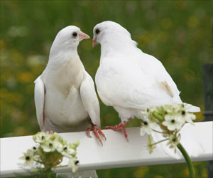 Birds Also Fall in Love Just Like Humans and Females Choose Their Mates